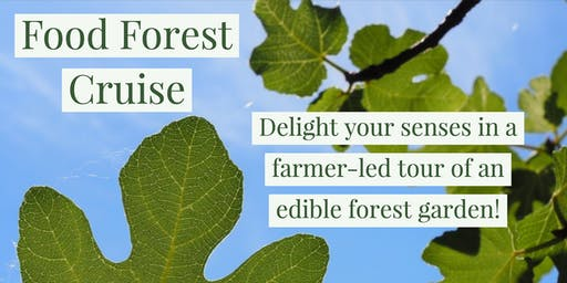 Food Forest Cruise in July