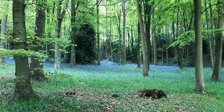 Magical Woodland Walk - Family Event tickets