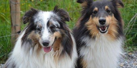 Exame Ginecológico, Endocrinologia e Inseminação Artificial Intravaginal e Intrauterina na Espécie Canina ingressos