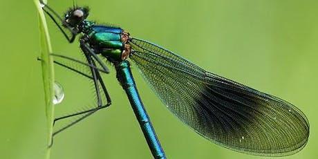 Identifying Dragonflies and Damselflies tickets