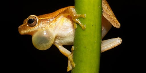 Storytime - Discover Frogs - Morisset Library