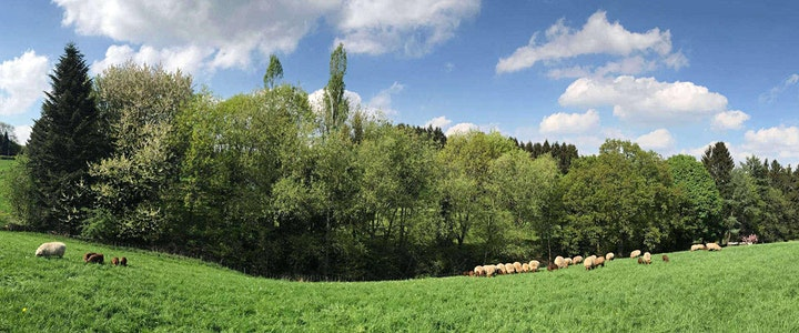 Einzelplatz: Das Wittener Muttental zu Pferd entdecken!: Bild