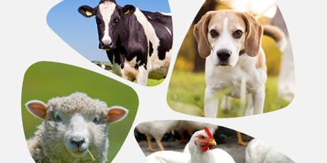 CHINA: THE NEW SWEET SPOT FOR ANIMAL HEALTH INDUSTRIES? tickets