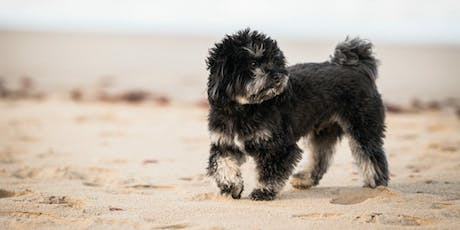 Canine portraiture: A workshop with The Norfolk Dog Photographer tickets