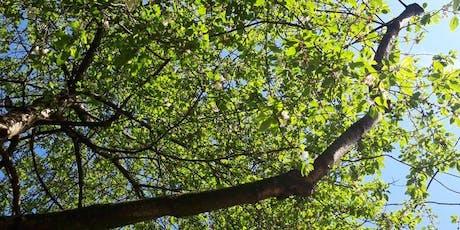Kundalini Yoga in the Park - Bloomsbury tickets