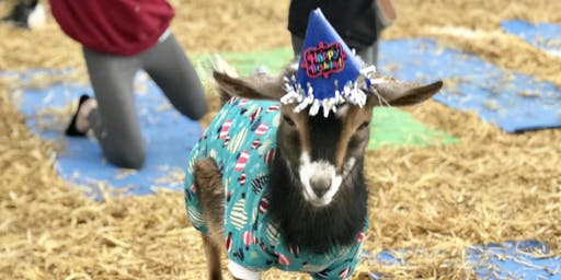 Goat Yoga Nashville- Birthday Party