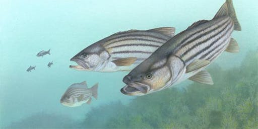 West Marine Woburn Presents Striped Bass Seminar