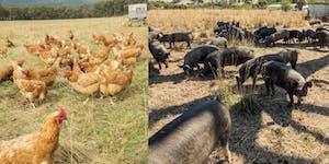 Small-scale pig and poultry farm planning workshops...