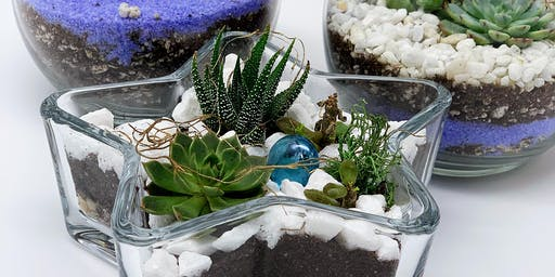 Big Sale — Coming Art Class: Succulent Garden(Only 4 spots)