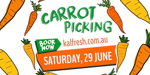 SOLD OUT - Kalfresh Carrot Field Day CARROT PICKING ONLY