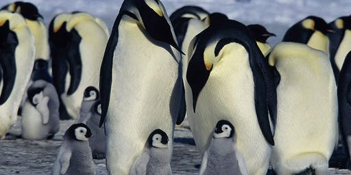 March of the Penguins (Family Film Series)