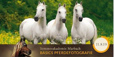 SOMMERAKADEMIE PFERDEFOTOGRAFIE - Basics für Anfänger
