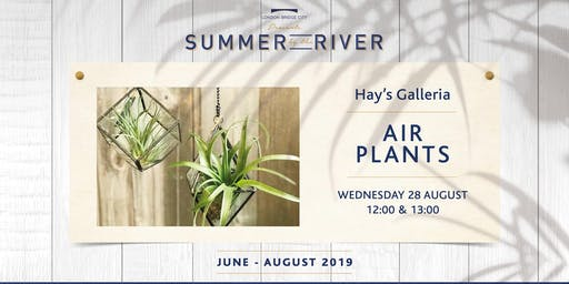 Summer by the River: Air Plants