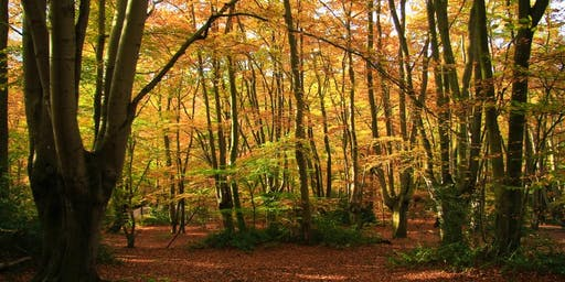 Meditation on a Woodland Walk
