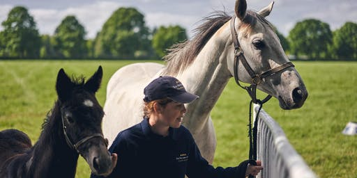 The National Stud Training and Careers Open Day