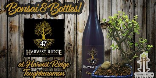 Bonsai at Harvest Ridge Winery - Toughkenamon