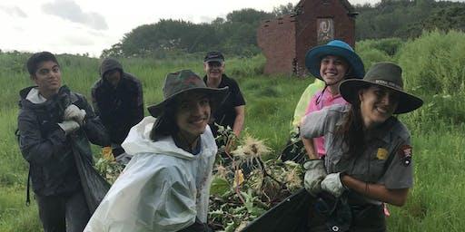 Stewardship Saturday at Lovells Island