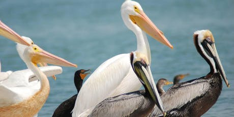 Charlotte Harbor Aquatic Preserves Nature Boat Tour Ecotour tickets
