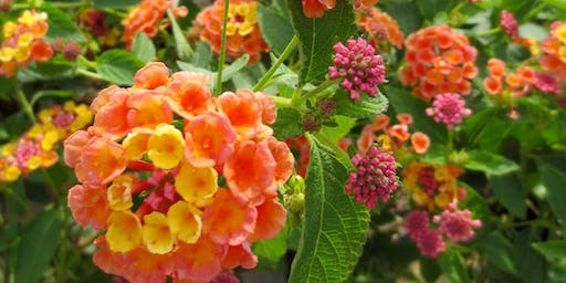 The Texas Tried and True: Proven Perennials for Summer