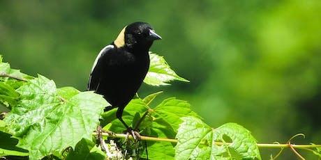 Bird-Friendly Certified Hay Monitoring-June 26 tickets