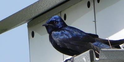Youth Birding Club - May 2019