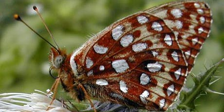 "Interpretive Hike in the Nestucca Bay-""Saving the Silverspot Butterfly"" tickets"