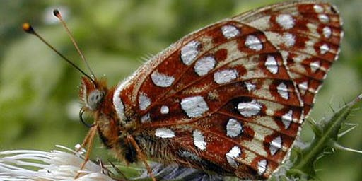 "Interpretive Hike in the Nestucca Bay-""Saving the Silverspot Butterfly"""