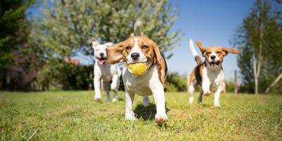 An ADF families event: Dogs Day Out, Townsville