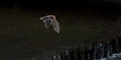 Durham Wildlife Trust Bat Walk