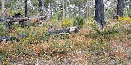 Bibbulmun Track Mountain View 4 day Adult Trek Western Australia
