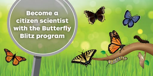 Butterfly Blitz Kick-off Training