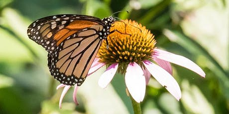 10th Annual Butterfly Day at DeKorte Park tickets