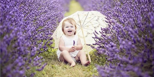 Lavender Field Photo Sessions