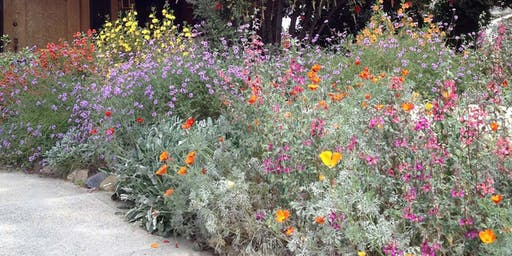 Building Resilience with Native Plants: Right Plant, Your Place with Lili Singer