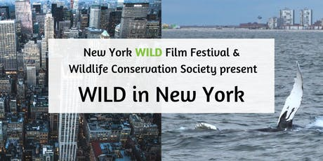 WILD in New York tickets