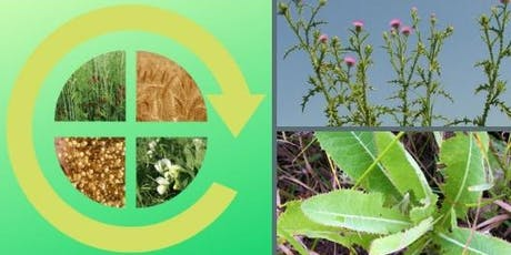 Primary & Perennial: Strategies for Optimizing Rotations & Managing Weeds tickets
