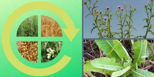 Primary & Perennial: Strategies for Optimizing Rotations & Managing Weeds