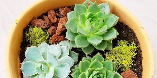 Succulent Diffuser