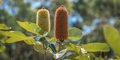 Habitat Garden Tour - Botanic Gardens Day