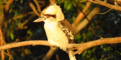 Bush Explorers - Bird-watching for beginners workshop: Ingleburn Reserve  tickets