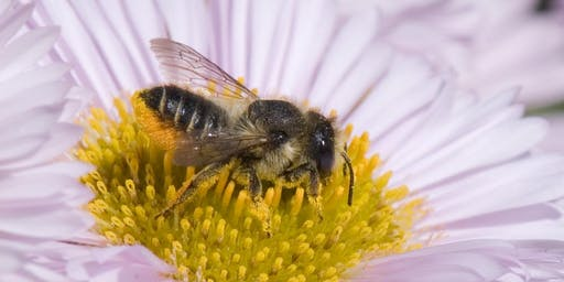Mason & Leafcutter Bees