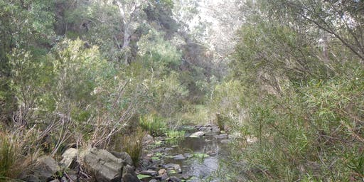 Watercourse restoration guided walk -Finniss River