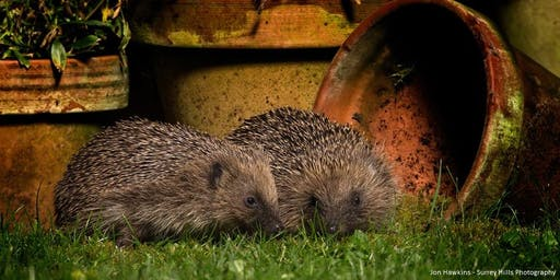 Improve your Garden for Wildlife