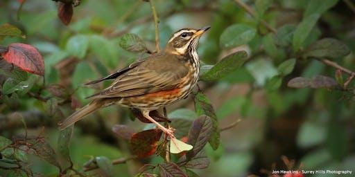 Autumn Bird Id