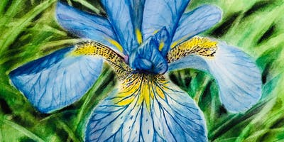 Summer Drawing and Painting Workshop - Birds, Butterflies, Flowers, and Botanicals