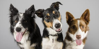 Pet Portrait Event (Northwich) - A day to remember for you & your pet