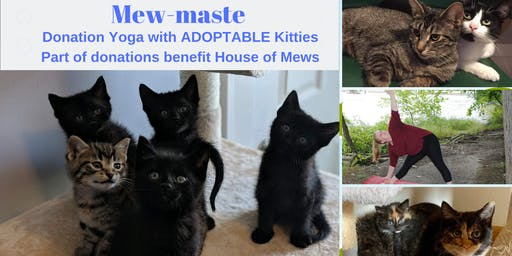 Mew-Maste Yoga and Cat Adoption