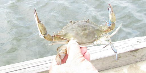 Crabbing Basics: making it Delicious, keeping it Sustainable