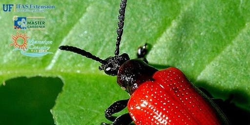Air Potato Challenge - Leaf Beetles Available for the Public
