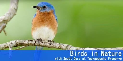 Birds in Nature  with Scott Dere at Tackapausha Preserve